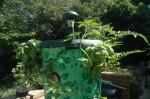 Topsy turvy planter at two weeks, tomatoes, basil and tomatillos