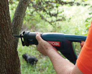 The standard Ryobi is adequate for most homeowner chores, shown here cutting a red bud tree branch.