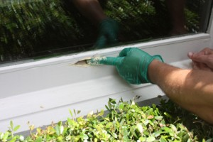 Fixing Rot on Wooden Windows