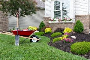 Five Spring Tips for the Yard & Garden