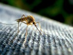 5 Quick Tips for Home Pest Control