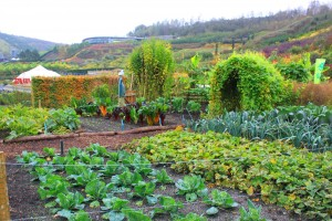7 Tools to Make the Garden of your Dreams