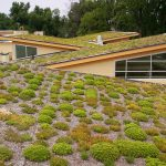 Create a Green Roof