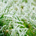 How to Care For Your Lawn This Winter
