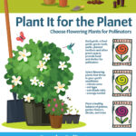 Plant It for the Planet